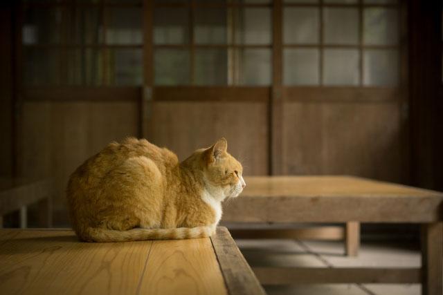 コシラックで猫背解消